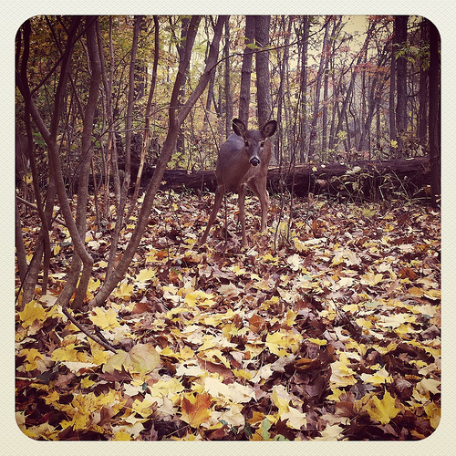 More deer in the Arb.